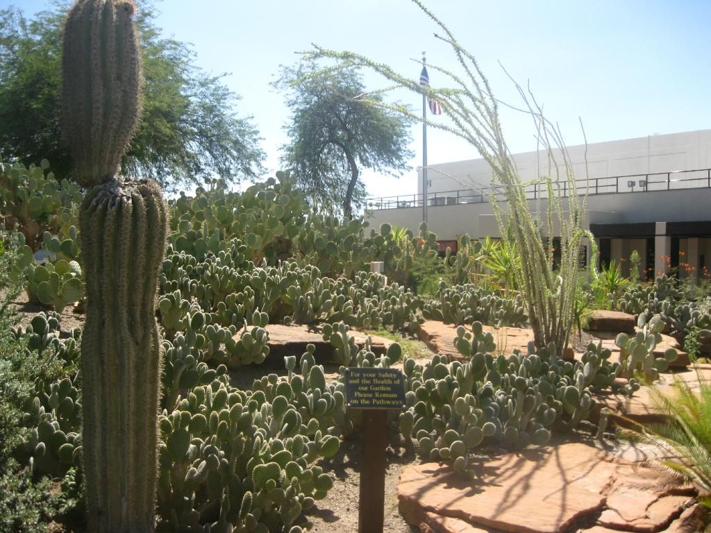 Book your tickets online for Ethel M Chocolates Factory and Cactus ...