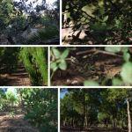 Il progetto di Studio Massaiu per vivere la Natura