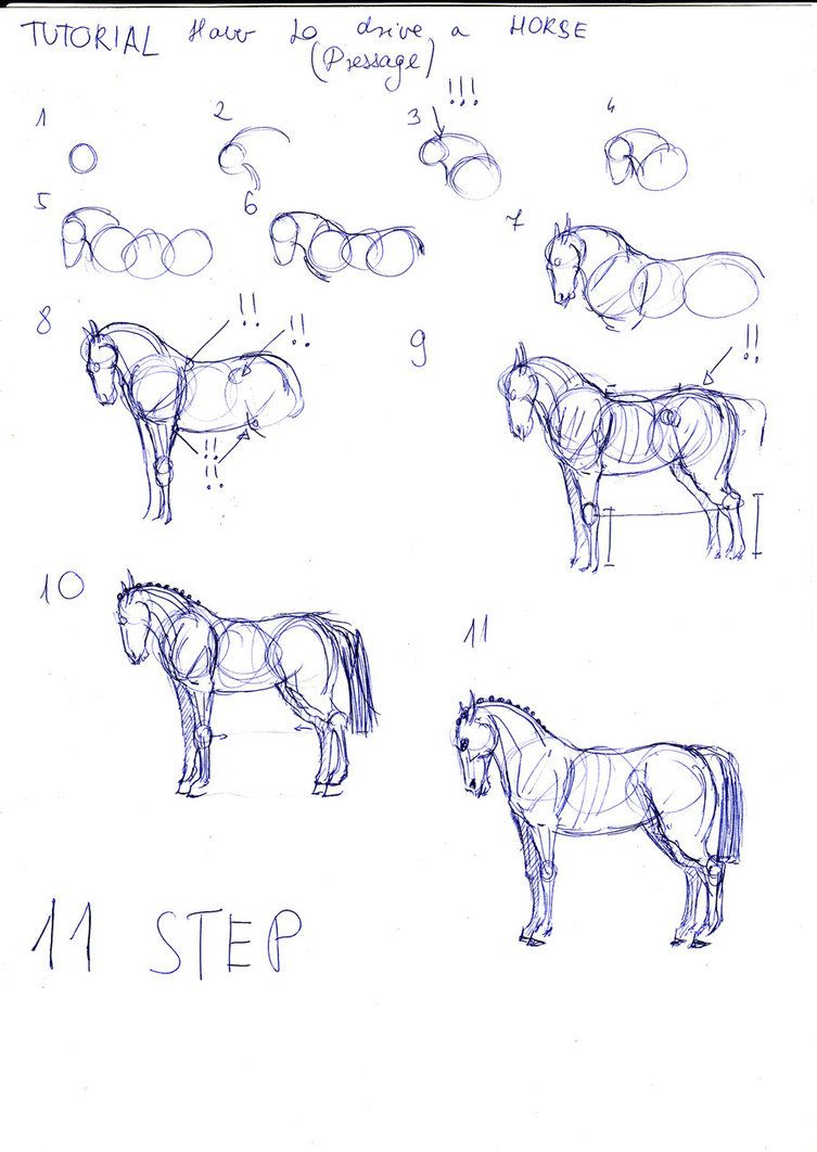 Horse Easy Stepbystep Drawing Tutorial 17 Best Images About How To Draw On  Pinterest Cats,