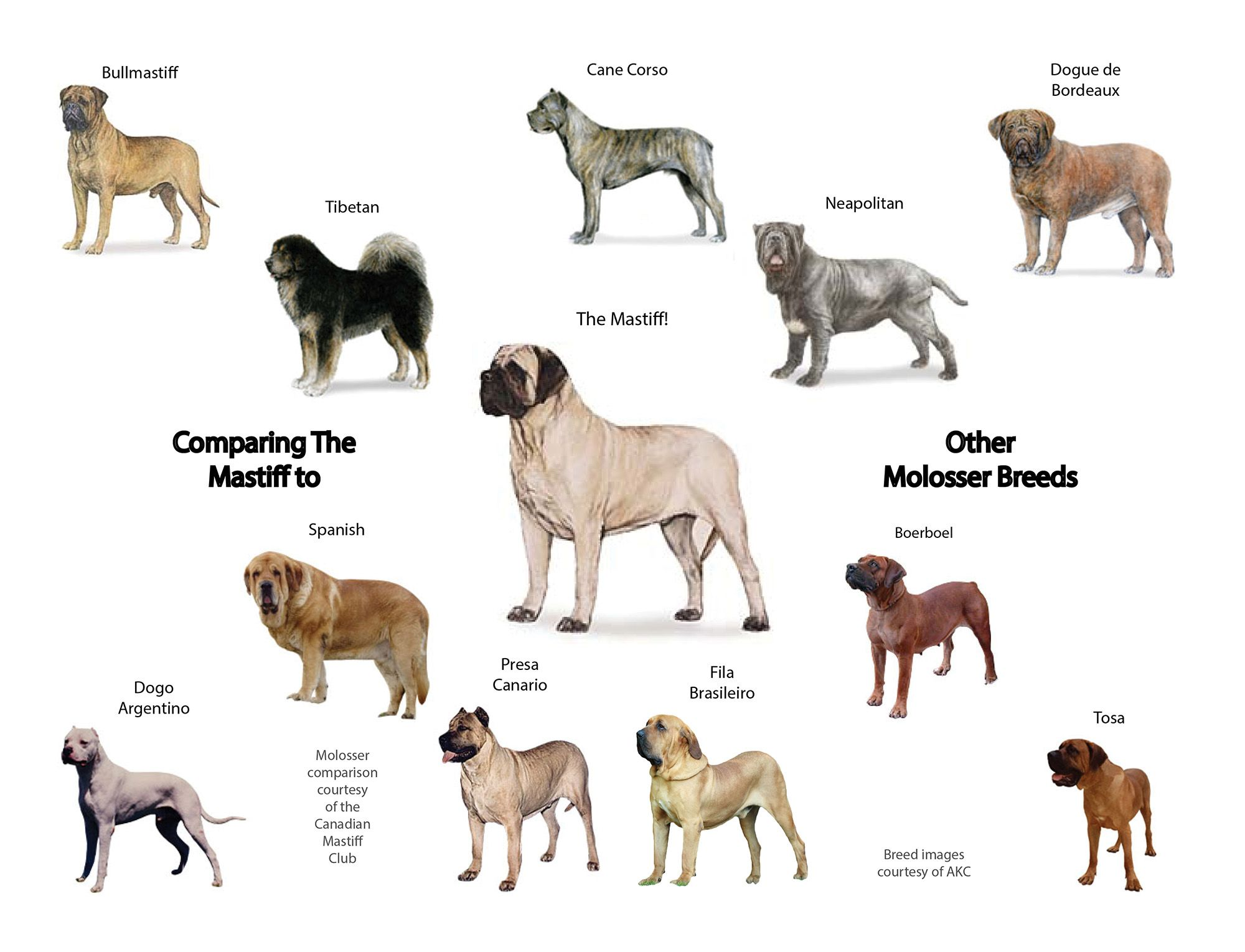 Uk Oldest Dog Breed Uk