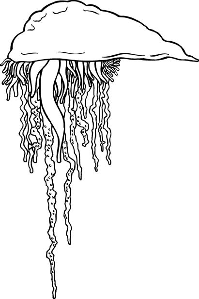 Free Jellyfish Clipart | Jellyfish | Pinterest