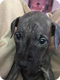 Detroit Mi Terrier Unknown Type Medium Mix Meet Vanilla