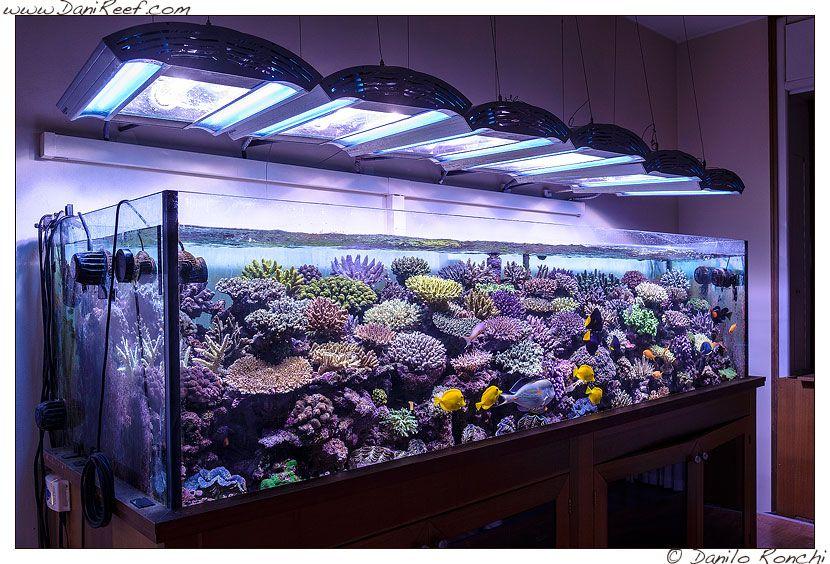 L 39 acquario marino di pietro romano acquariofilia for Acquario marino 300 litri prezzo