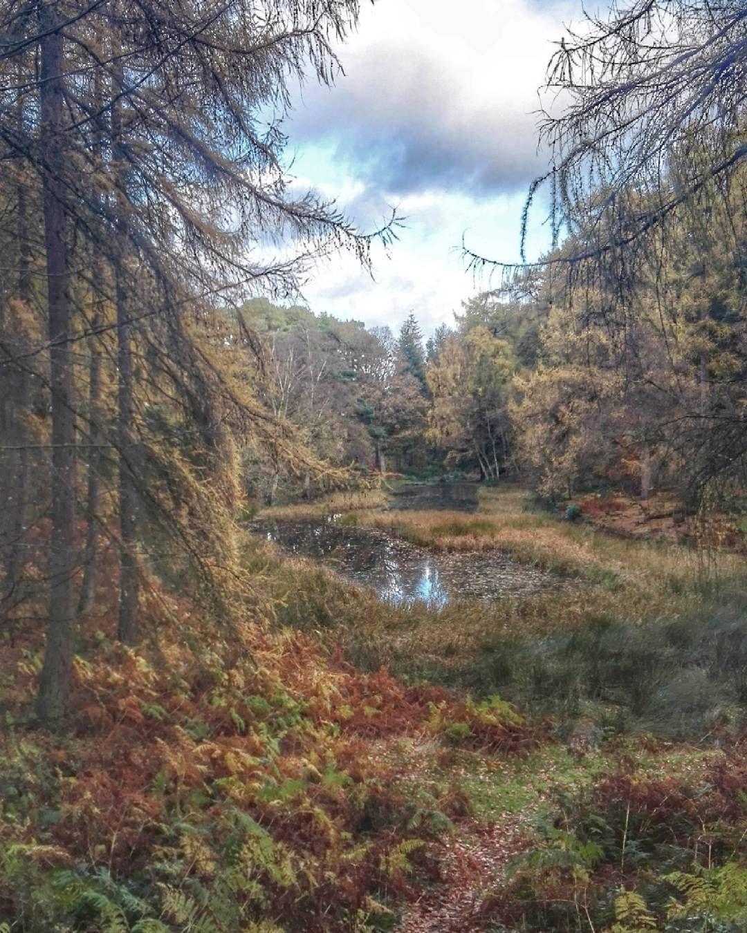 Autumn walks in the English countryside #allenbanks #stawardgorge #victoriangardens #englishparks #northumberland #nationaltrust #landscape #landscaping #tarn #hiking #walking #mountains #hikingadventures