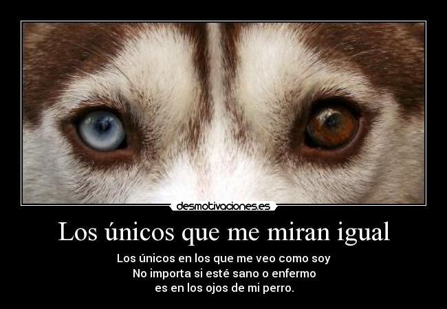 Husky Frases: Los Ojos Del Perro Siberiano