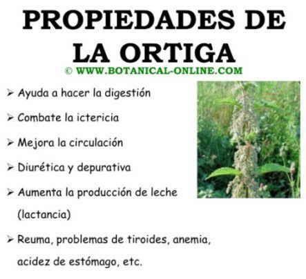 Propiedades medicinales de la ortiga salud plantas for Planta decorativa propiedades medicinales