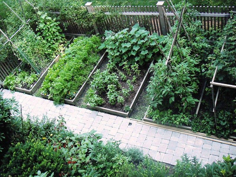 Small Vegetable Garden Design Garden Vegetable Garden 400 x 300