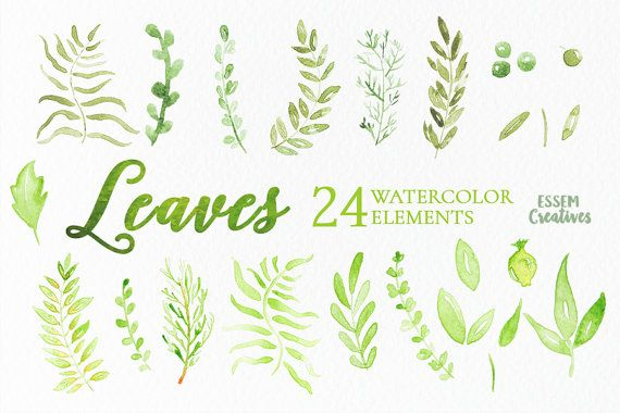 24 Watercolor Leaves Clipart Green Watercolor Elements Foliage