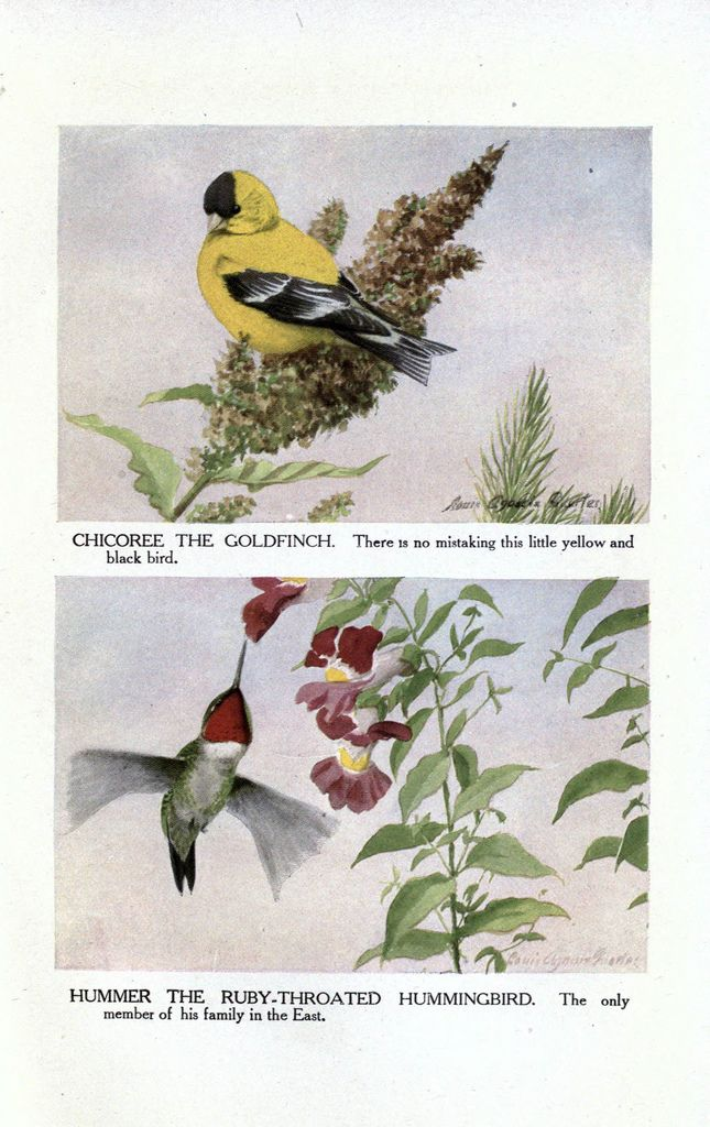 The Burgess Bird Book For Children Color Illustrations