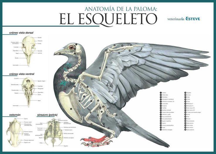animal skeleton diagrams google search illustrating illuminating