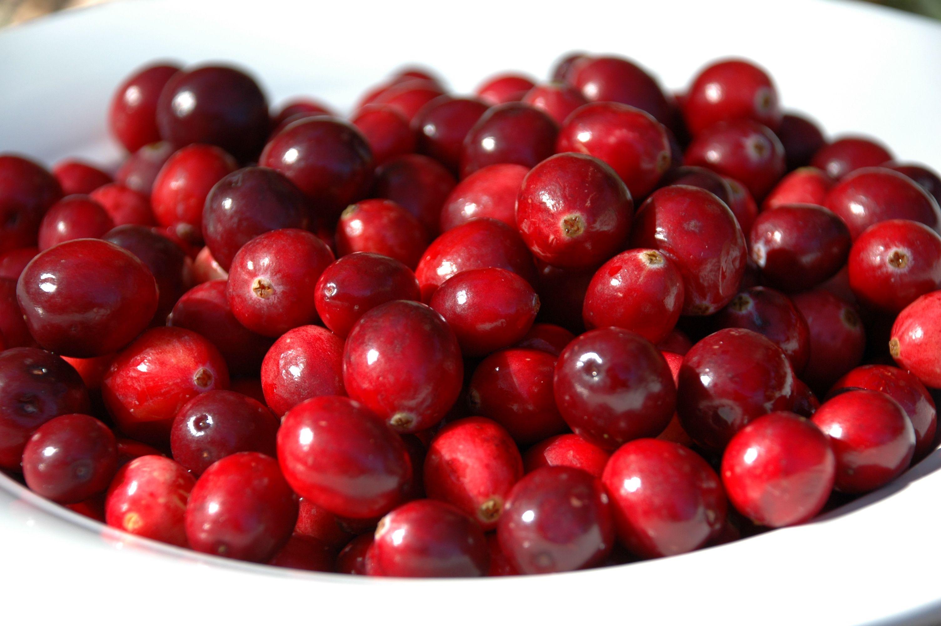cranberries : arandos vermelhos