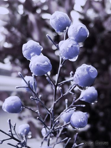 1000+ Images About Favorite Color ..Periwinkle :) On Pinterest