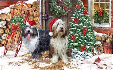 Bearded Collie - Christmas Welcome