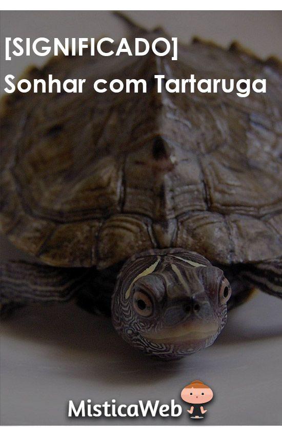 1e19bf8469 Significado de Sonhar com Tartaruga   +Vários    sonhos