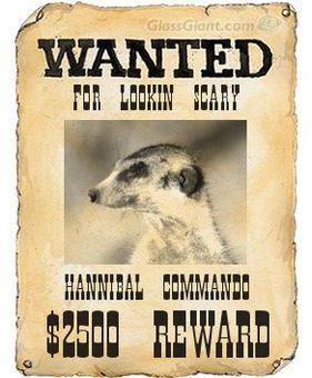 Hannibal Commandos - Meerkats Wiki