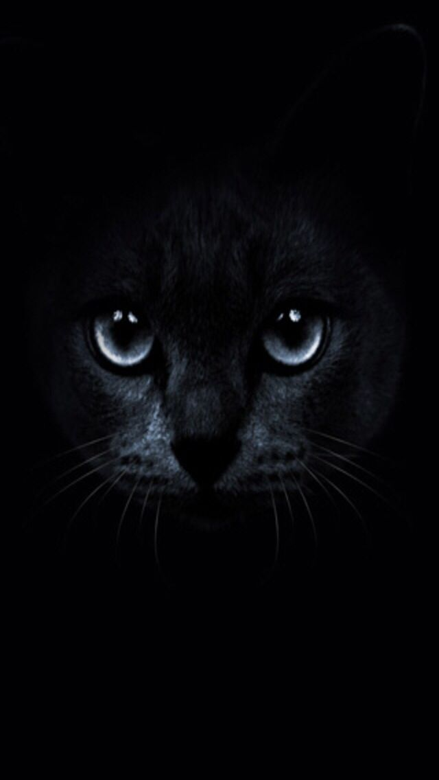 Black Cat With Blue Eyes Wallpaper Wallpapers Cats Cat