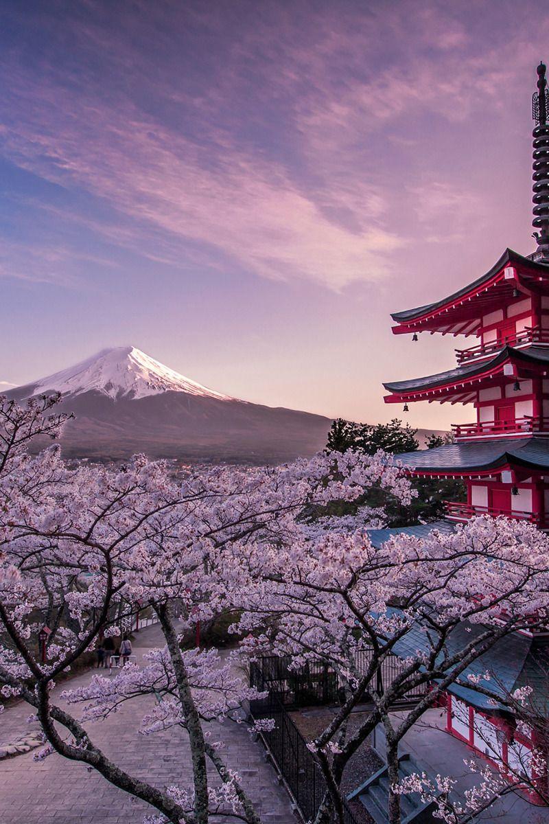 Pati Migli Banshy Japanese Spirit Jormungand 風景の壁紙 桜の壁紙 美しい風景
