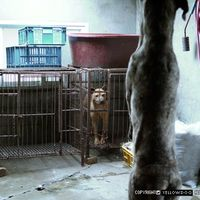 PLEASE SIGN....Stop Animal Abuse in South Korea! (Stop Animal Abuse in South Korea!)