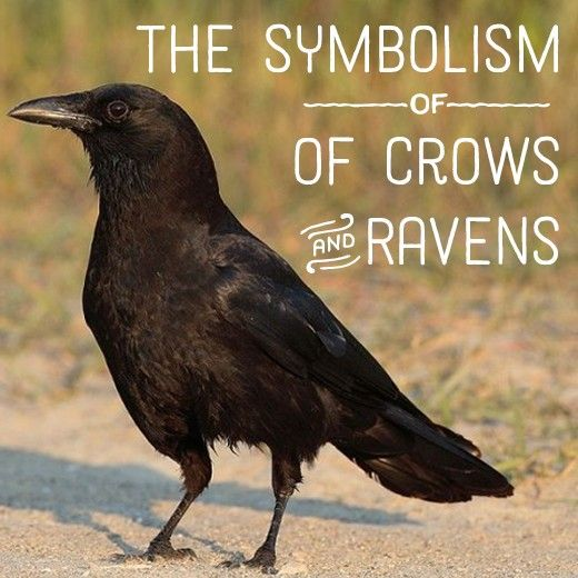 Raven And Crow Symbolism And Meaning Pinterest Crows Ravens And