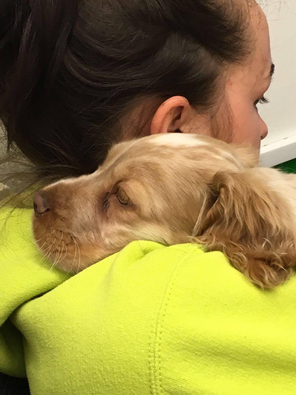Enjoying a cuddle dogs vets white crosses four legged