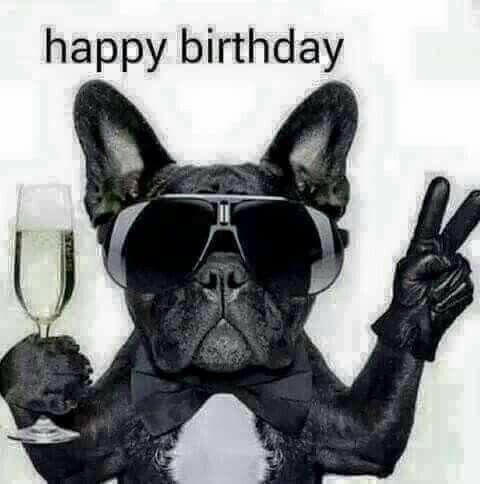 Happy Birthday Dawg Happy Birthday Pictures Funny Happy