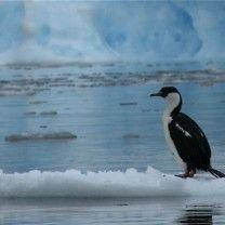 foto's antarctica - Google zoeken
