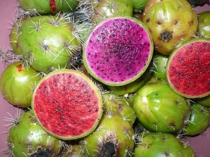 Pitayas fruta exotica frutas exoticas pinterest frutas ex ticas ex tico y fruta - Frutas tropicales y exoticas ...