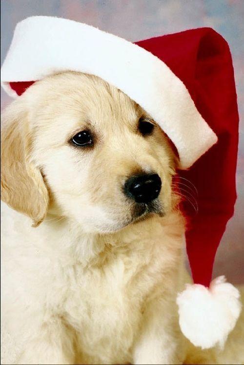 Acercamiento Personal Al Posicionamiento Web Christmas Puppy