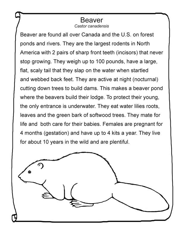 Beaver Printable Animals Beavers Beaver Scouts