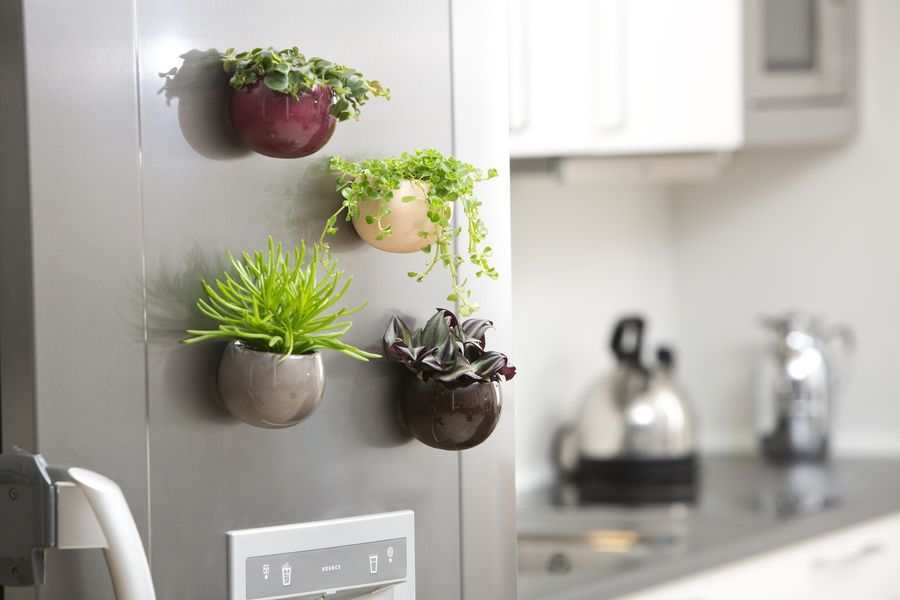 Floradania Marketing: Ceramic Magnetic Pot – make your fridge a little greener