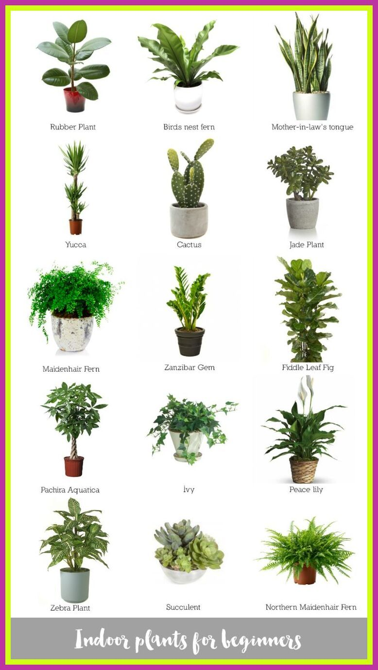 109 Reference Of Best Desk Plants No Sunlight In 2020 Plants Indoor Apartment Best Indoor Plants Indoor Plants