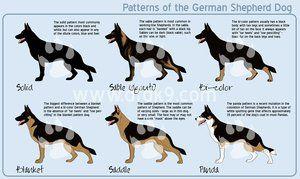 Belgian Malinois Colors German Shepherd Colors German Shepherd