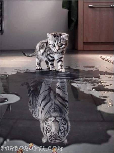Najlepsze zdjęcia zwierząt 120