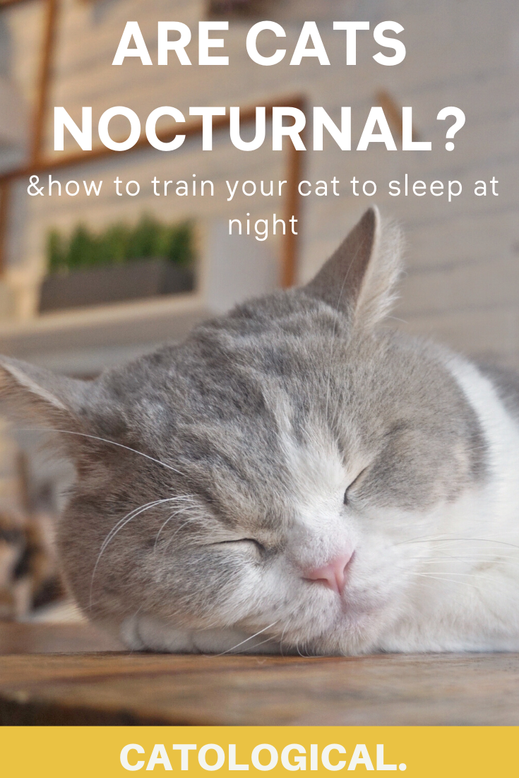 Are Cats Nocturnal How To Get Your Cat To Sleep At Night In 2020 Cats Cat Training Cat Parenting