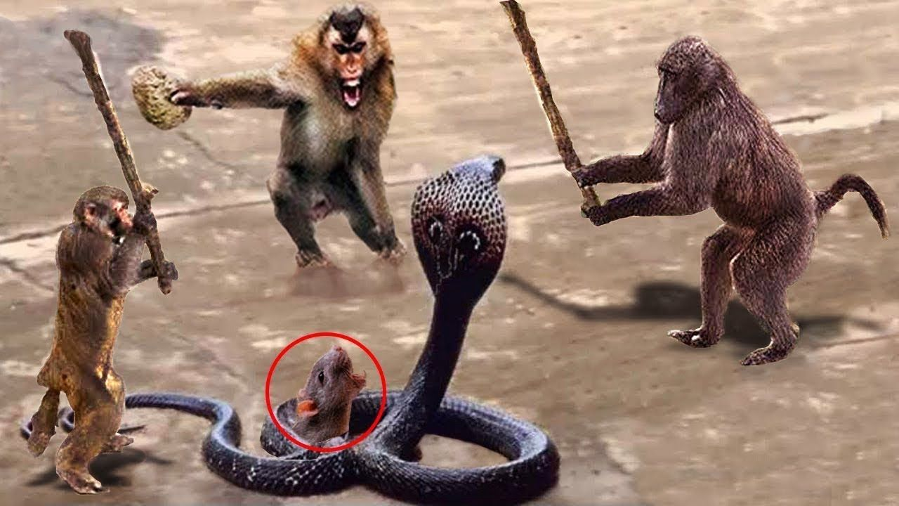 LIVE Wild Animals Ultimate Fights 2018! Amazing Monkey