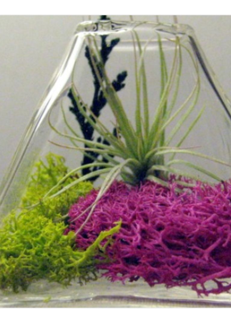 Pink moss in nests for a couple of special centerpieces baby