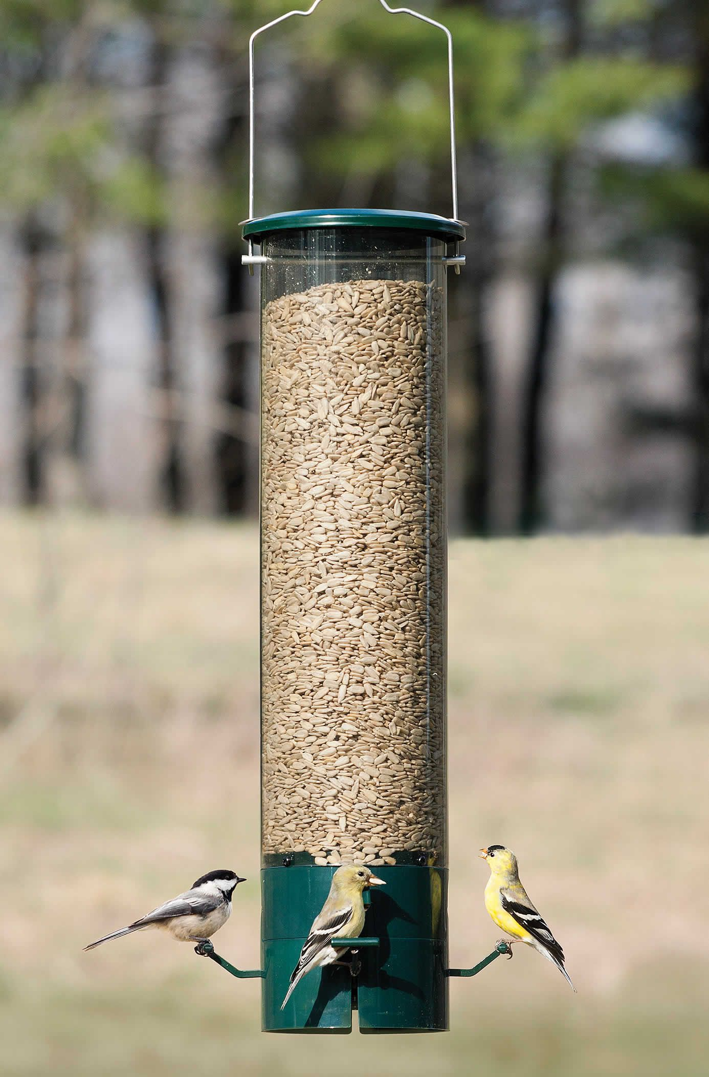 proof ii com bird squirrel absolute zoom duncraft feeder