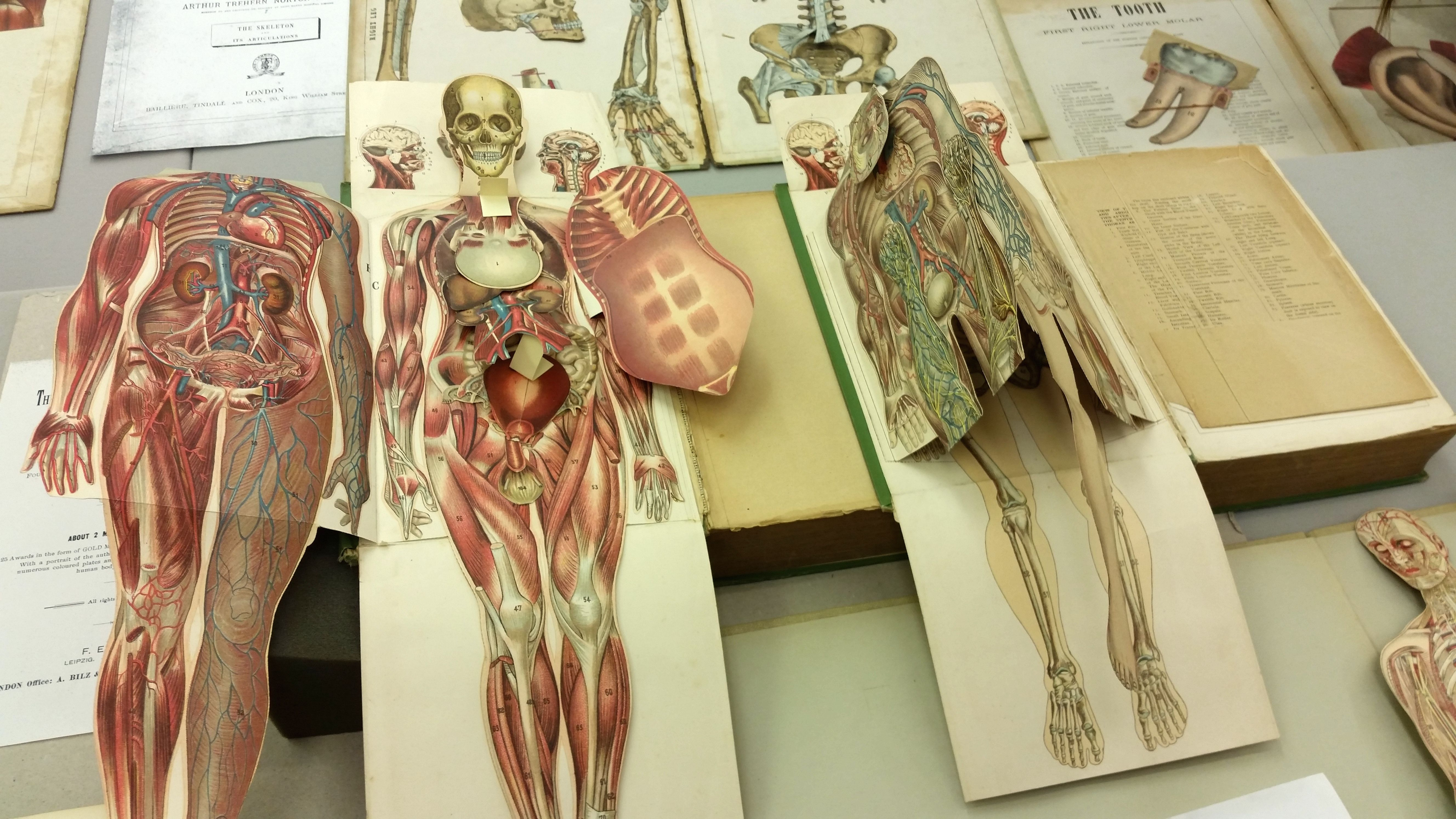 human anatomy for artists book