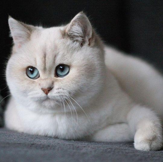 Luna De Antiguedades Gatos Bonitos Mascotas Bonitas Gatos