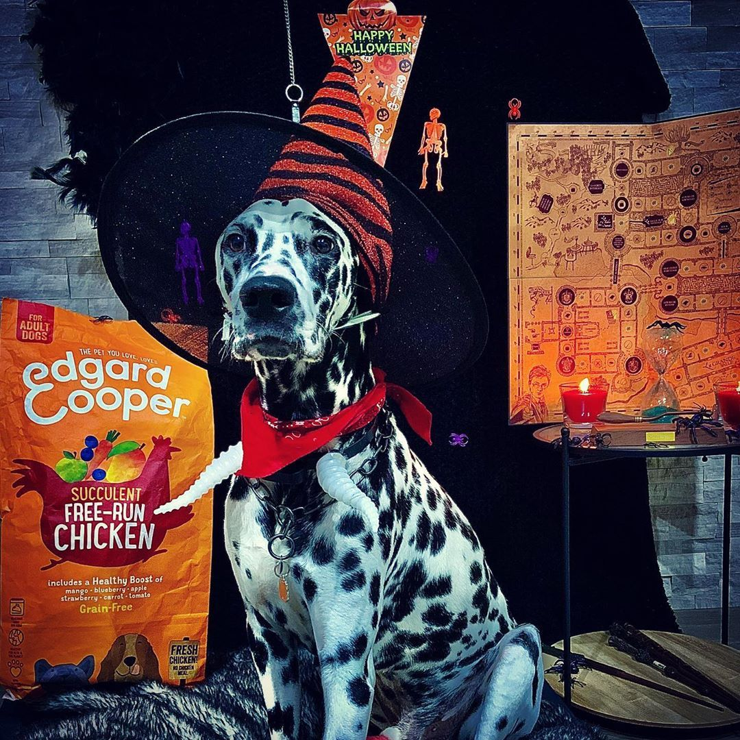 Arti The Wizard Is Celebrating Halloween Edgardcooper