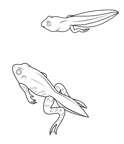Tadpole And Froglet Coloring Page From Frogs Category Select From
