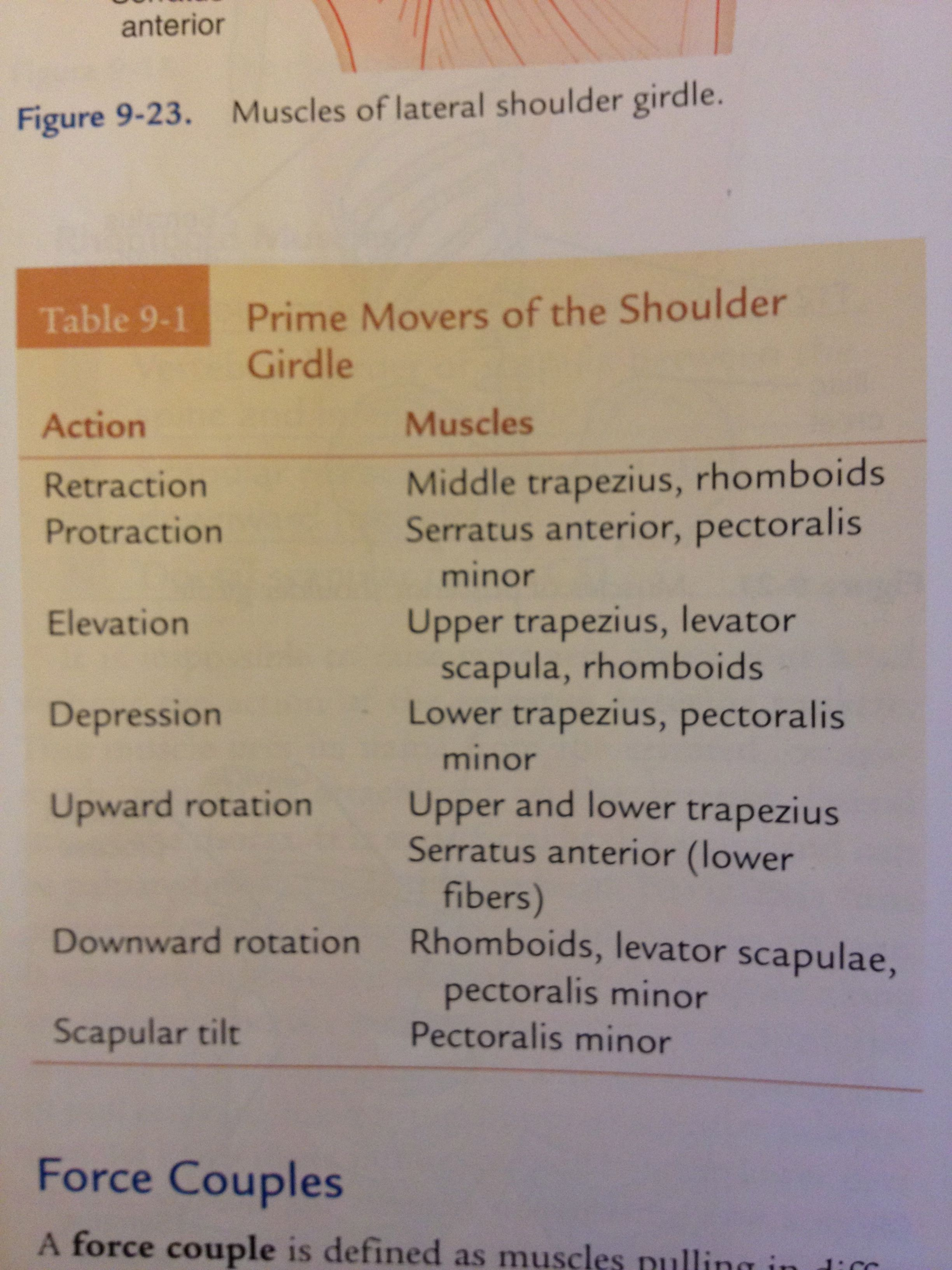 Prime Movers Of The Shoulder Girdle From Cilincal Kinesiology
