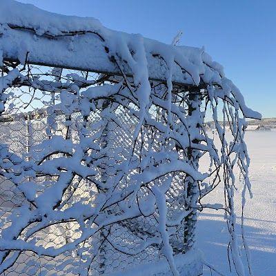 Mias Landliv: Winter beauty