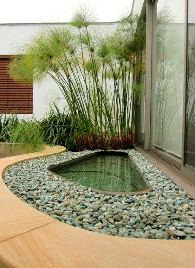 No voy a olvidar de poner papiros cerca de mi jard n for Jardines acuaticos