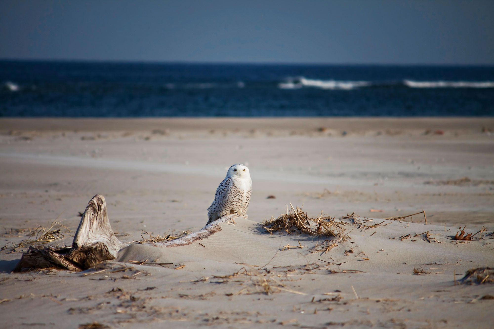 When the owl go to the beach...