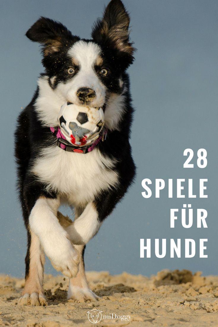 28 Spiele Fur Hunde Die Besten Ideen Von Hundeexperten Hunde Spiele Hunde Hund Und Katze