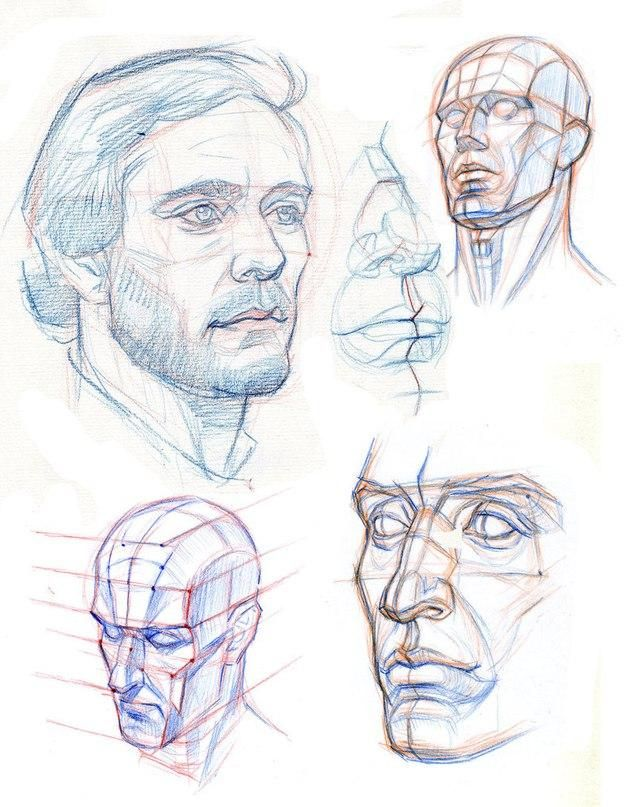 Pin de Ann Beleush en tutorials   Pinterest   Anatomía
