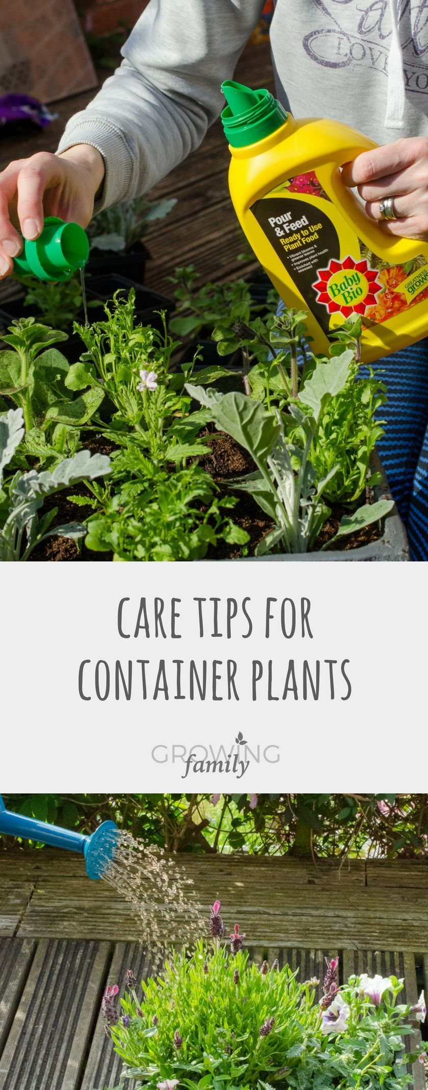 care tips for containers Not sure how to take care of your container plants? These plant care tips explain how to keep them happy, with the help of Baby Bio Pour & Feed plant food.Not sure how to take care of your container plants? These plant care tips explain how to keep them happy, with the help of Baby Bio Pour & Feed plant food.