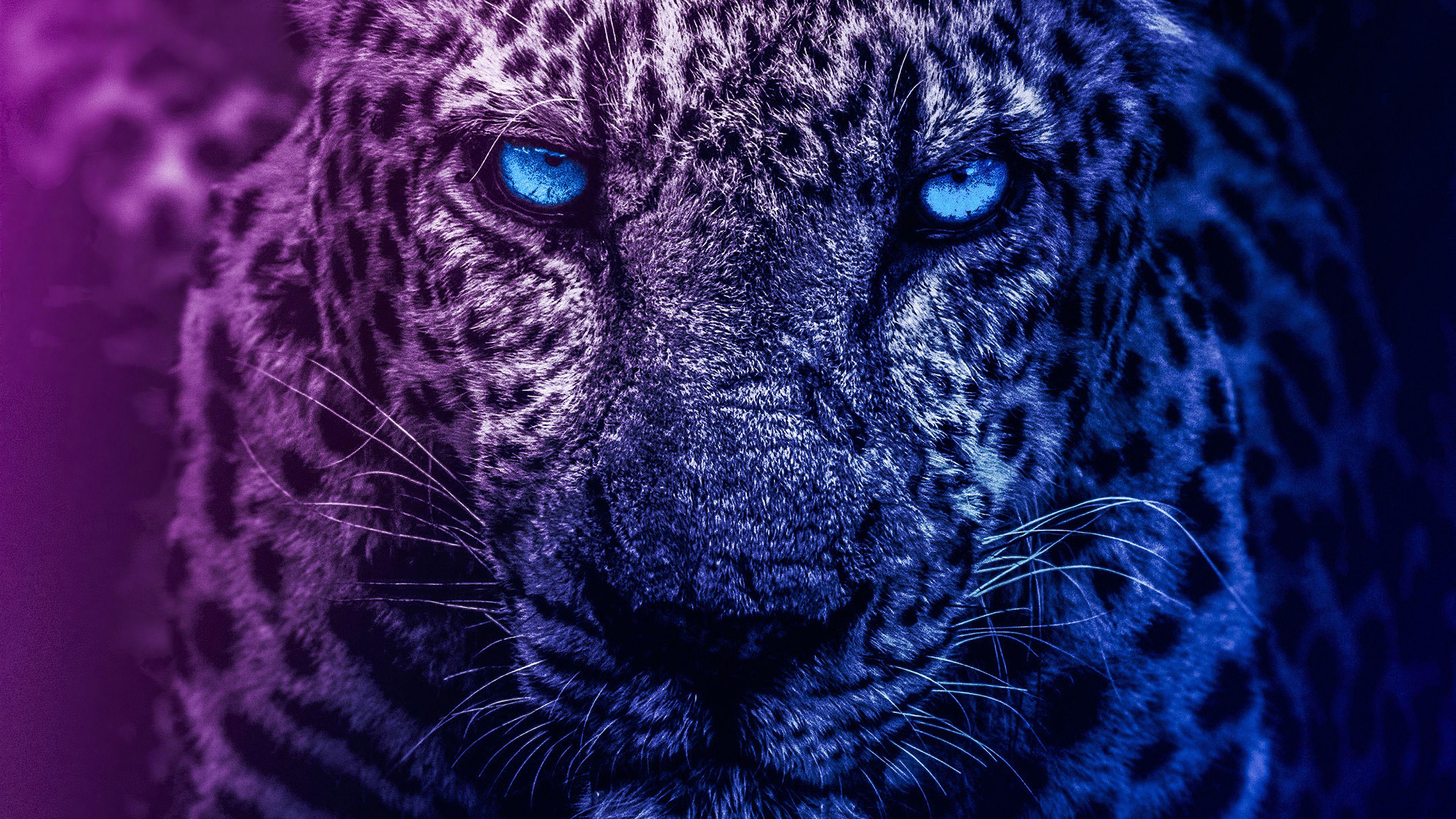 Blue Eyes Lion Lion Wallpapers 4k Lion 4k Wallpapper Blue Eyes Lions 4k Wallpaper In 2020 Lion Wallpaper Animal Planet Lion