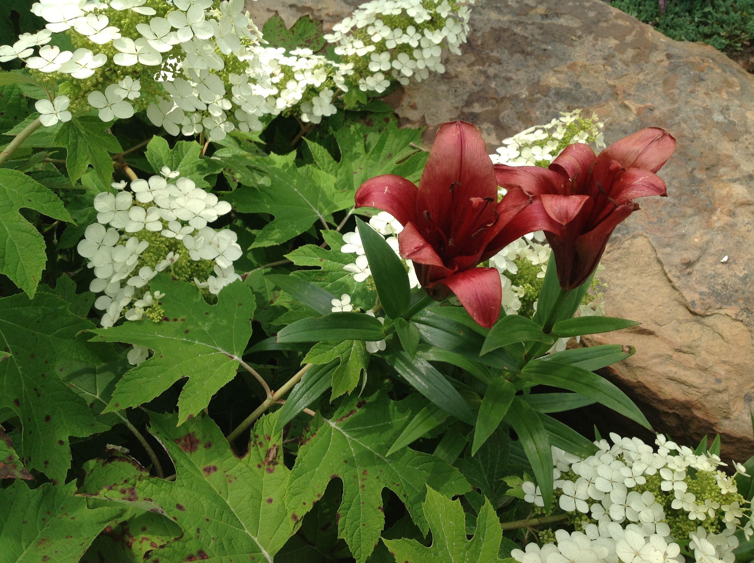 Oak leaf hydrangea and lily.